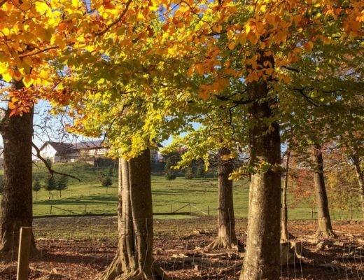 Bergtierpark Blindham, Aying